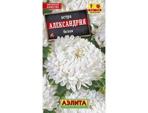 Астра Александрия белая --- Одн
