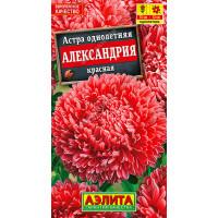 Астра Александрия красная --- Одн