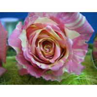 Роза Фиеста(чайно-гибридная)